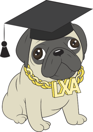 Paco the Pug wearing graduation hat