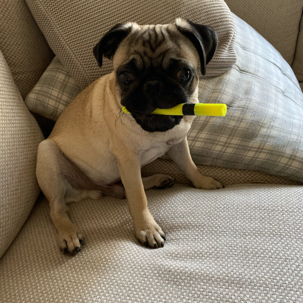 paco-highlighter